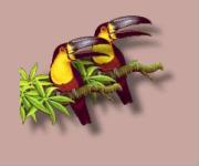 http://rus-linux.net/zen/png_feature/toucans.png